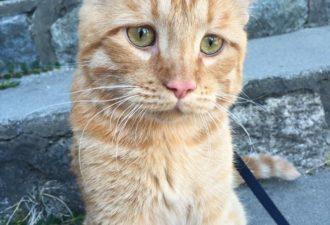 saddest-shelter-cat-benben-transformation-10